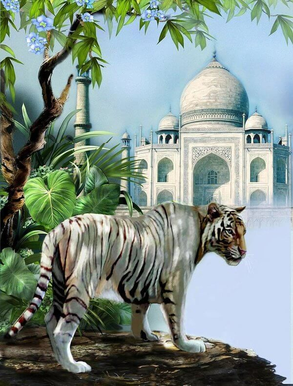 tajmahal-with-tigers-tour